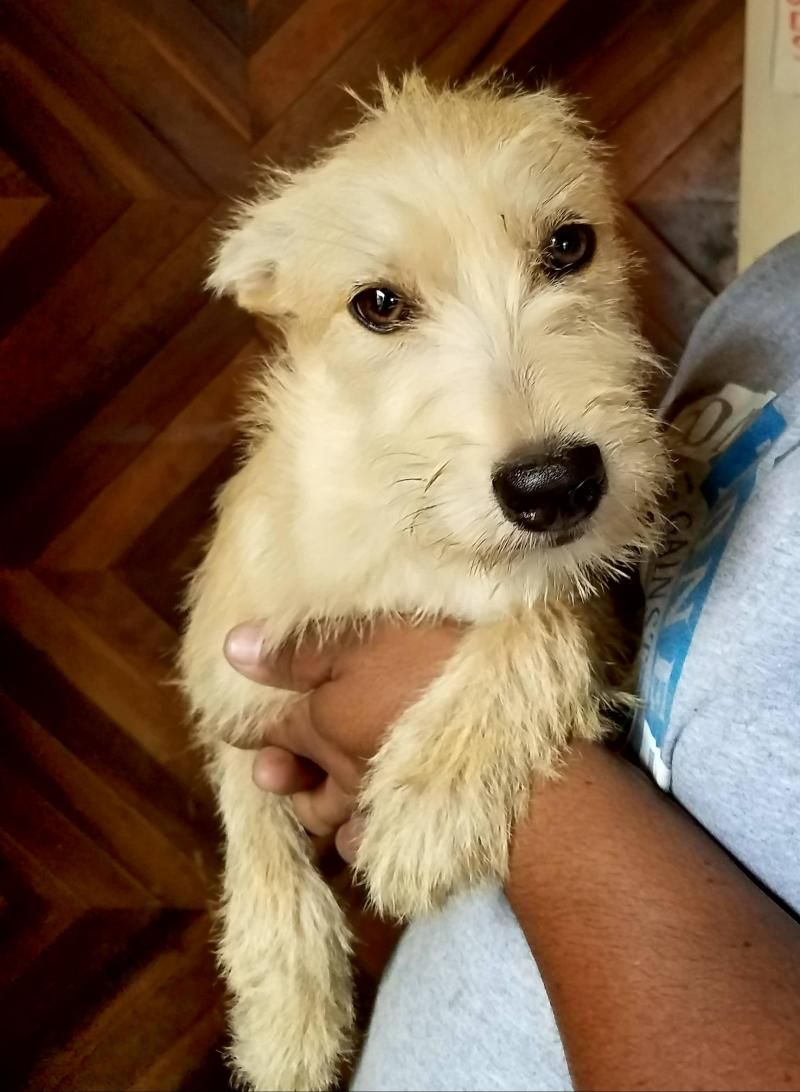 Adopt Ari Forever Loved On Petfinder Second Chance Animal Rescue Dog Search Terrier Mix Dogs