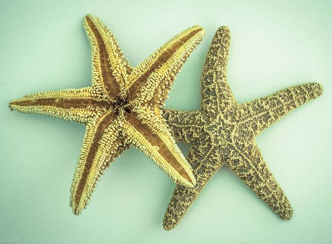 2 Starfish on light blue background | Blue backgrounds, Starfish and ...