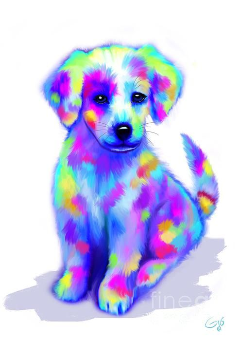 Painted Pup With Images Colorful Animals Cute Dog Pictures