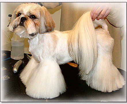 Pin On Shih Tzu Cuts