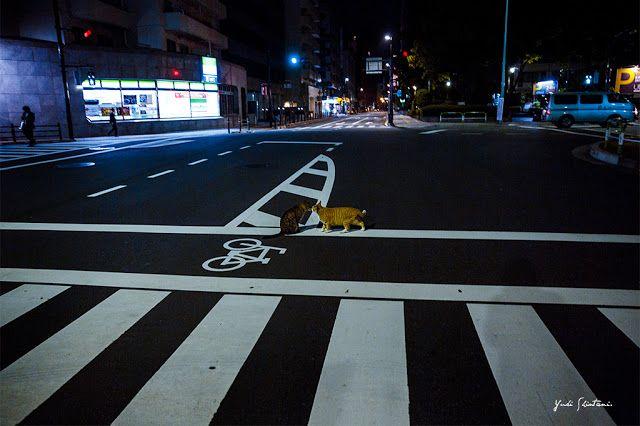東京猫色 : 交差点の中心で愛を。