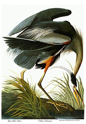 Vintage Audubon Design Decor Pinterest John James