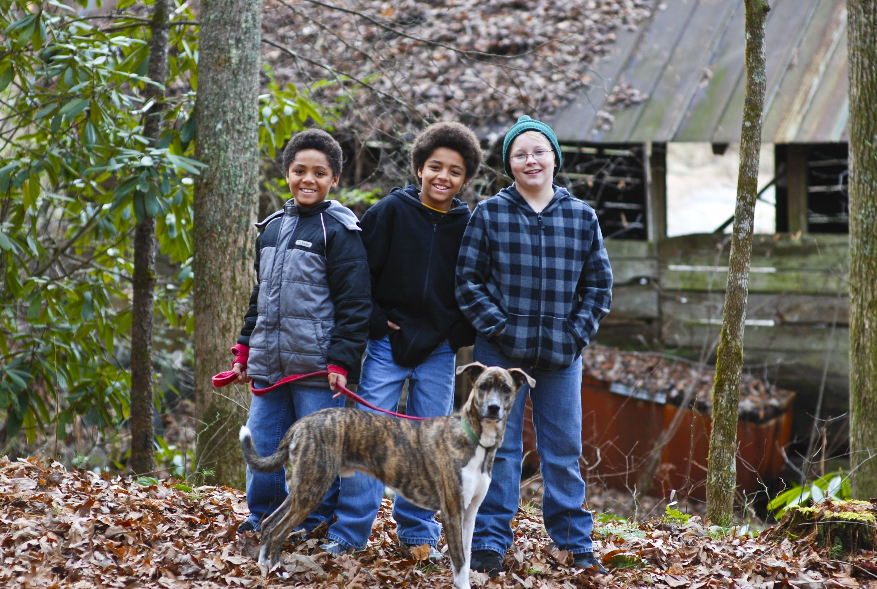 The three amigos and our dog Raider.  This is the view from our North Carolina cabin.  One of our favorite getaways!