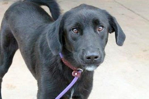 According to Facebook: Greenville County Pet Rescue, this beauty is running out of time at the high-kill upstate shelter. More information can be found on this Facebook thread.