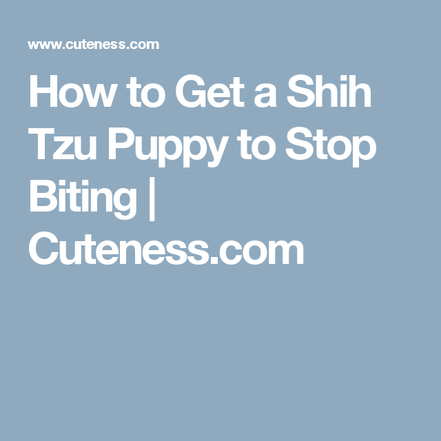 How To Get A Shih Tzu Puppy To Stop Biting Cuteness Com