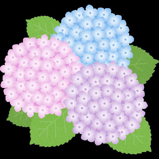 紫陽花あじさいの花のイラスト ポップ In 2019 紫陽花 イラスト