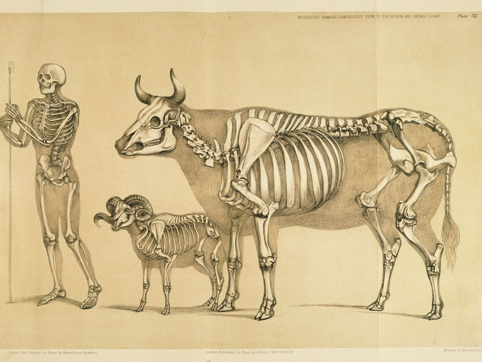Anatomia animal comparada | Pinterest | Anatomía animal, Anatomía y ...