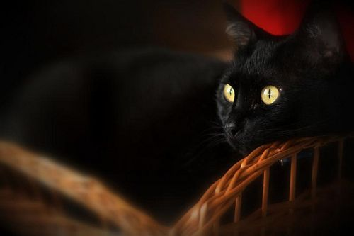 Boris by Catnip on Flickr.