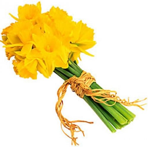 Daffodil Regard Rebirth New Beginnings Unrequited Love Youre