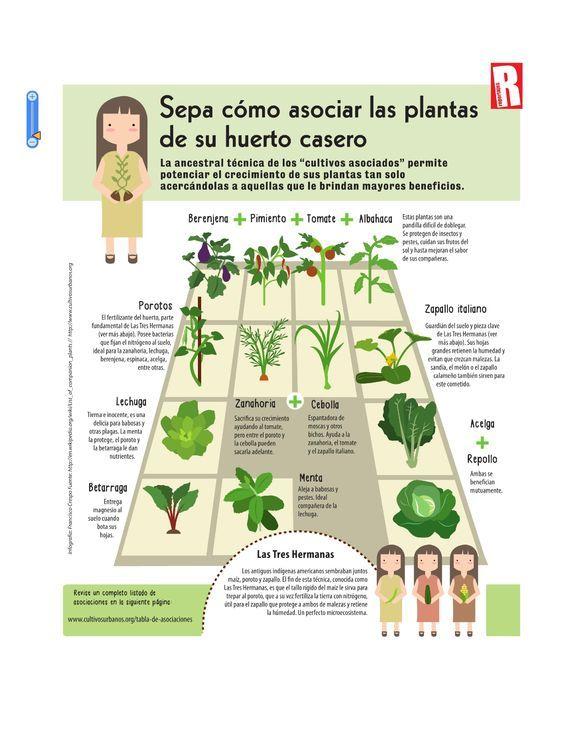 Asociaciones de cultivos huerto en casa jardin Asociaciones de cultivos favorables