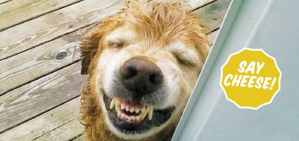Tips for A Dazzling Doggy Smile: Your dog won't be able to stop showing off his pearly whites!