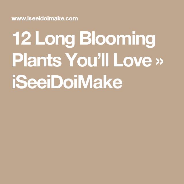 12 Long Blooming Plants You'll Love » iSeeiDoiMake