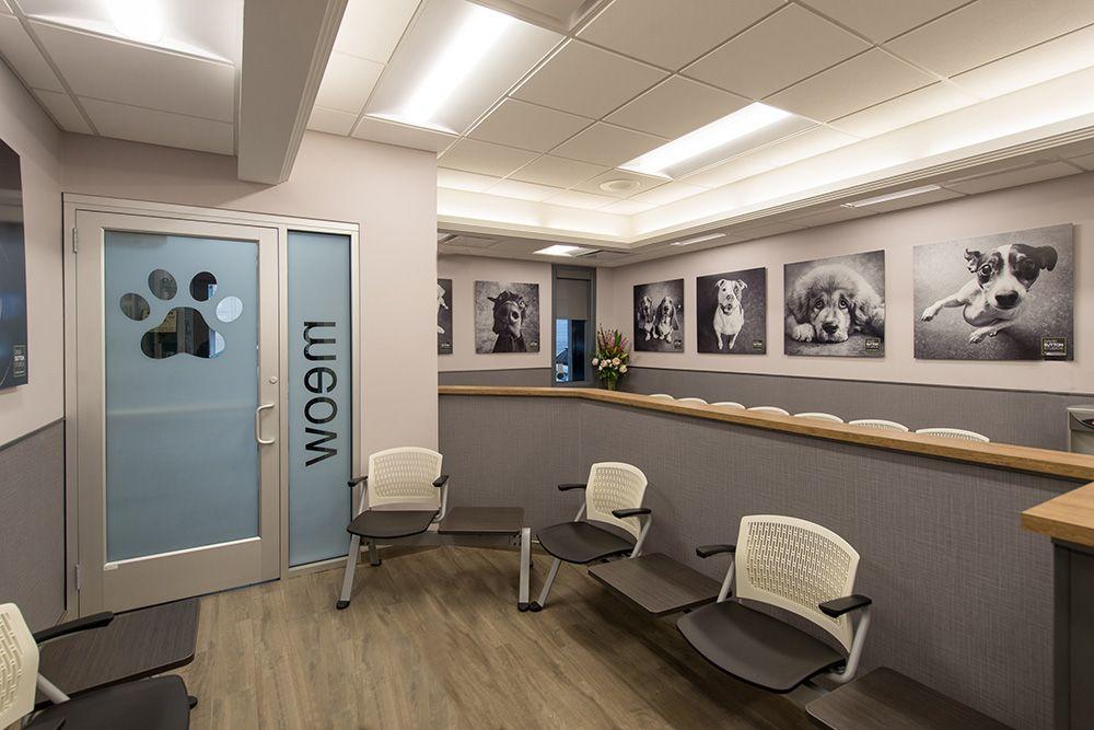 Apex Design Designed 1450 Sf Interior Design Renovation For An Established Animal Hospital That H Clinic Interior Design Veterinary Hospital Hospital Interior