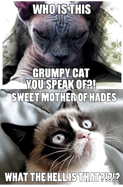 Funnymemes Funny Cat Memes So True Funny Cat Memes Funny Cat Memes Funny Cat Memes L In 2020 Funny Grumpy Cat Memes Funny Cat Memes Grumpy Cat Humor