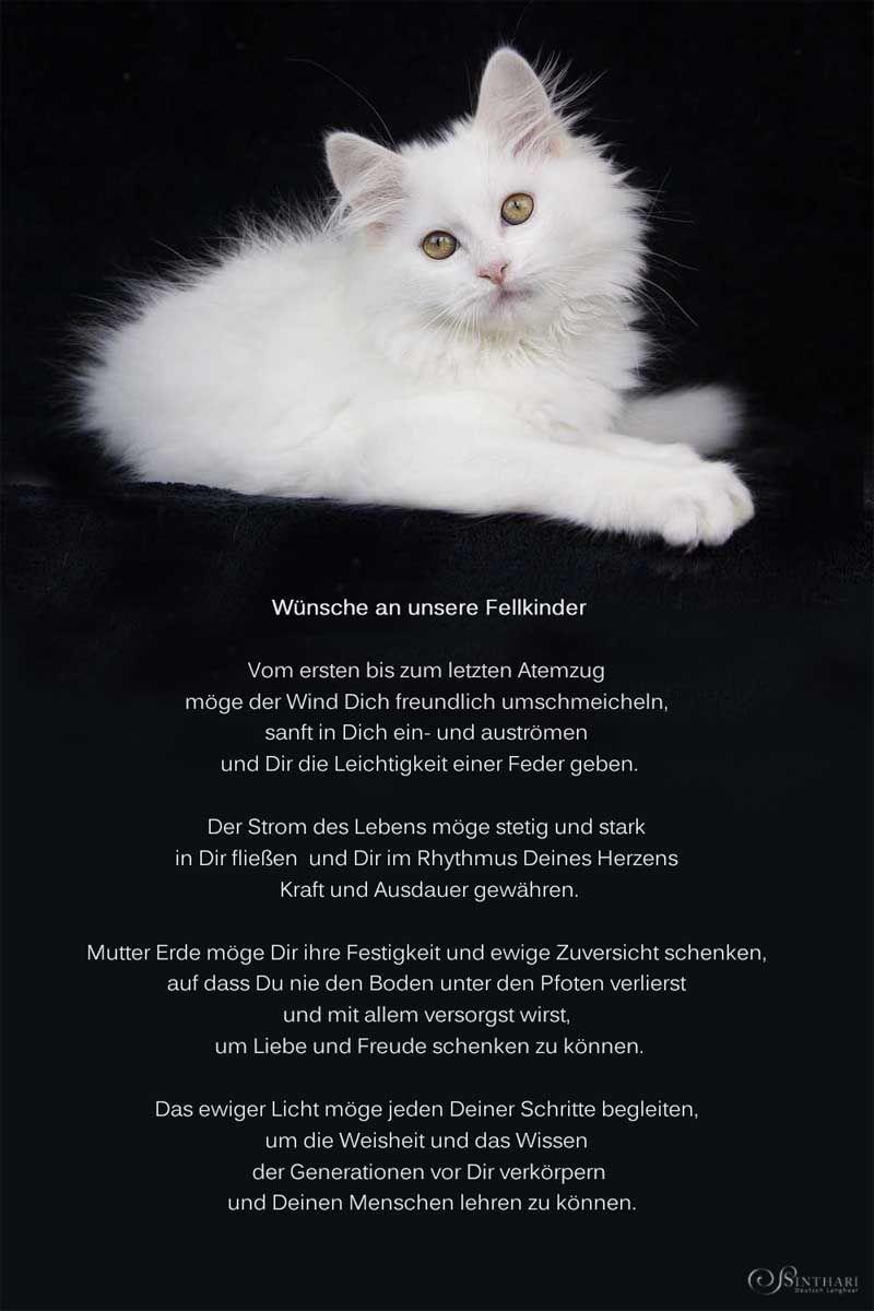 Mit Den Besten Wunschen Katzen Zitate Katzen Haustier Erinnerung