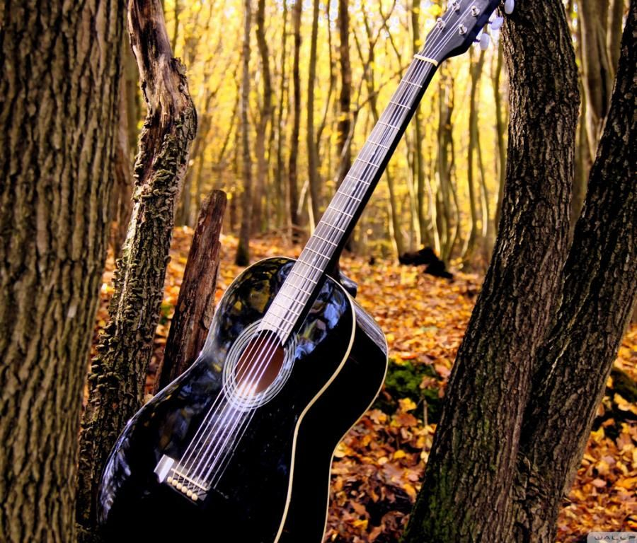 Guitar In Forrest Music Wallpaper Guitar Music