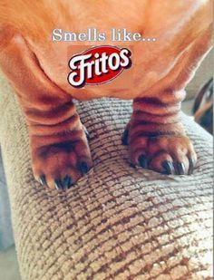 Dachshund feet smell like Fritos! From View from the ...