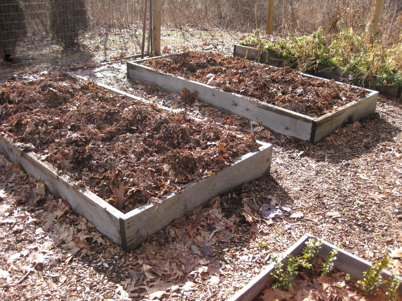 When to prune blueberries  To insure ongoing fertility from year to year and to avoid the need