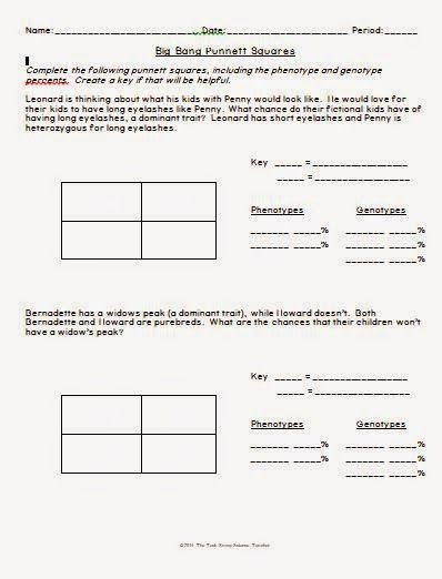 punnett square practice worksheet answers - Termolak