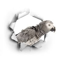 Tienda de aves