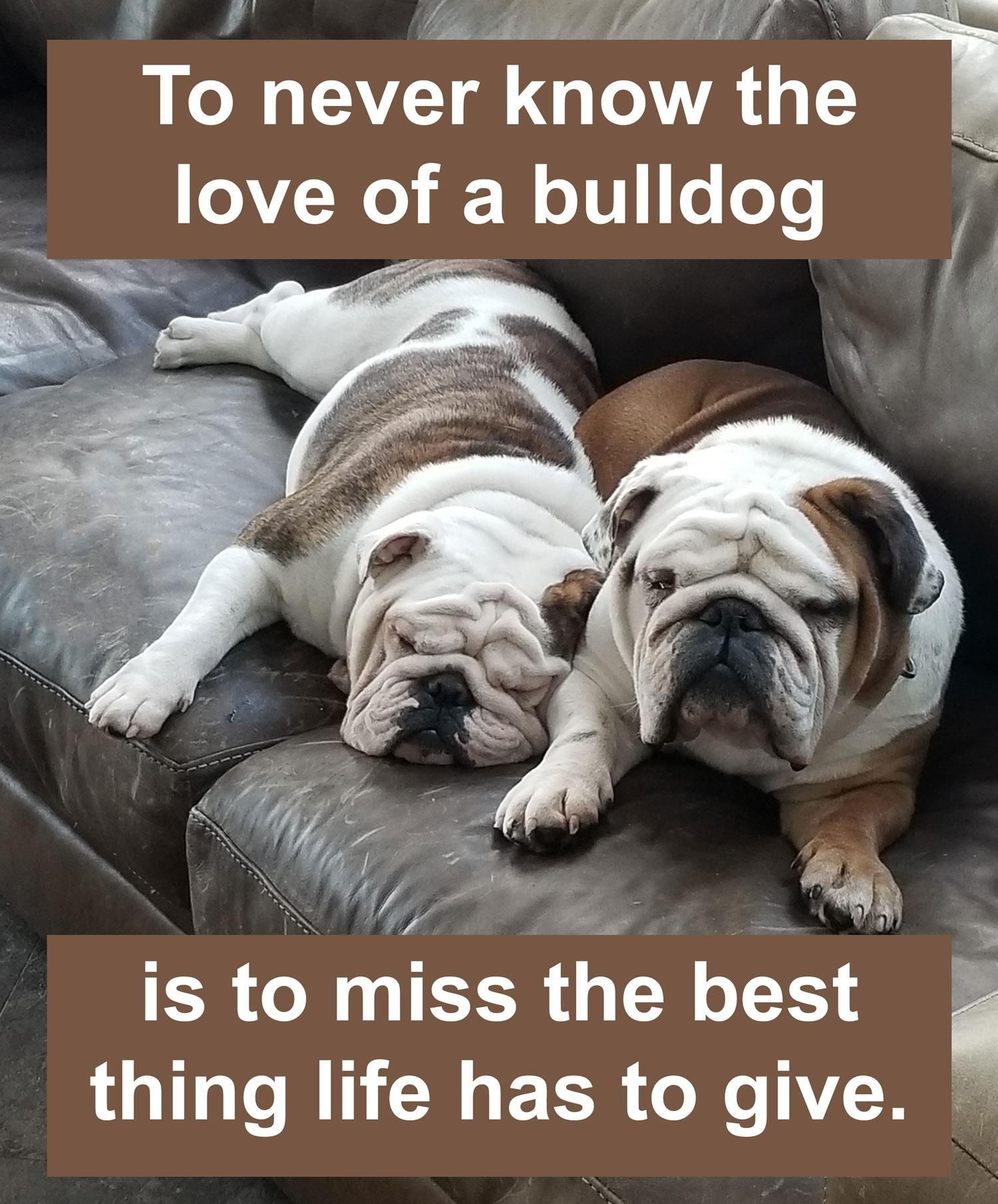 To Never Know The Love A Bulldog Is To Miss The Best Thing Life