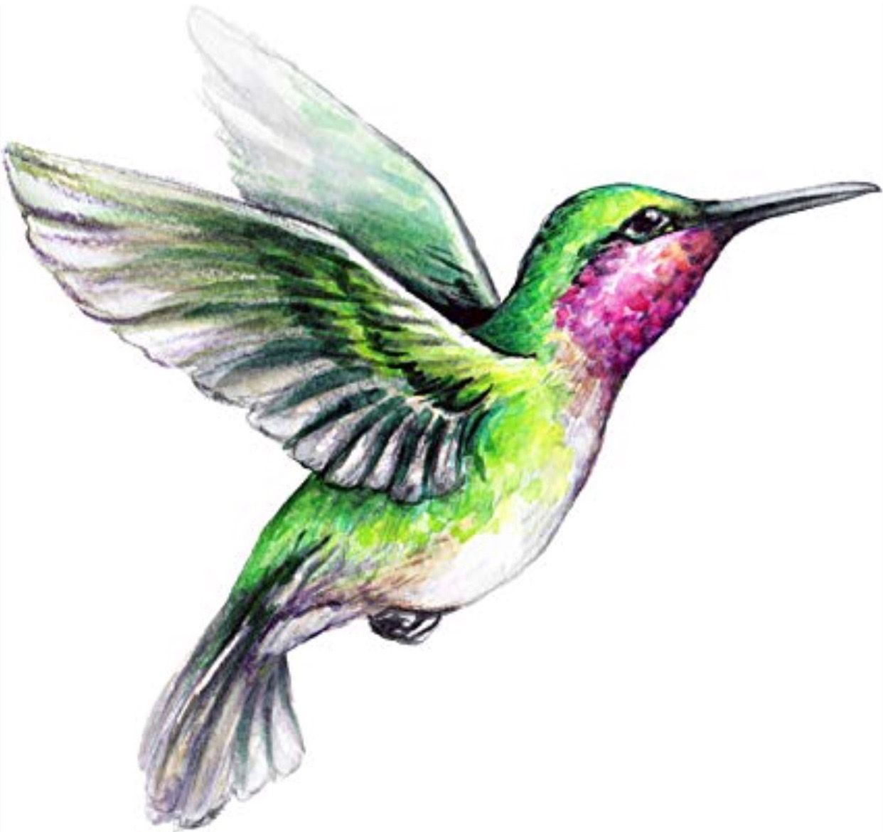 Hummingbird Hummingbird illustration, Bird drawings