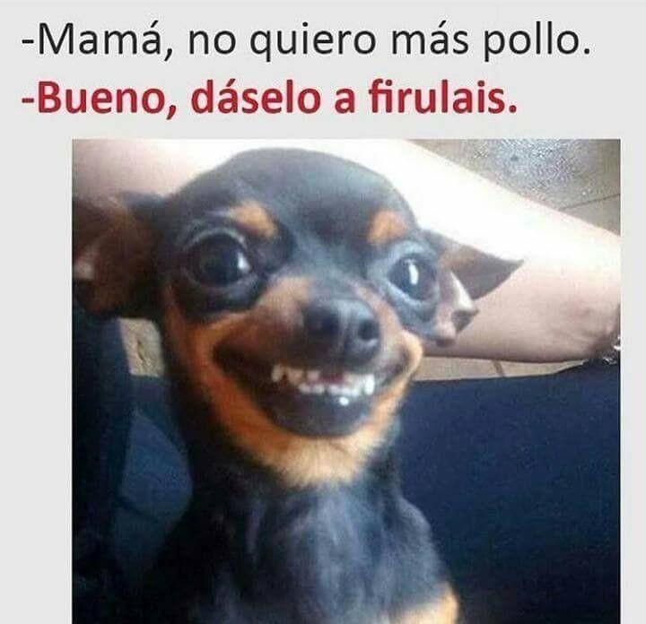 Pin De Karen Morel En Pongamos Humor En Nuestra Vida Perros Graciosos Perros Divertidos Memes Perros