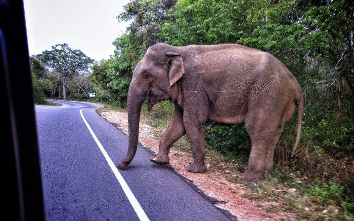 10. The same parking fee for a vehicle must be paid for an elephant tied to a parking meter.