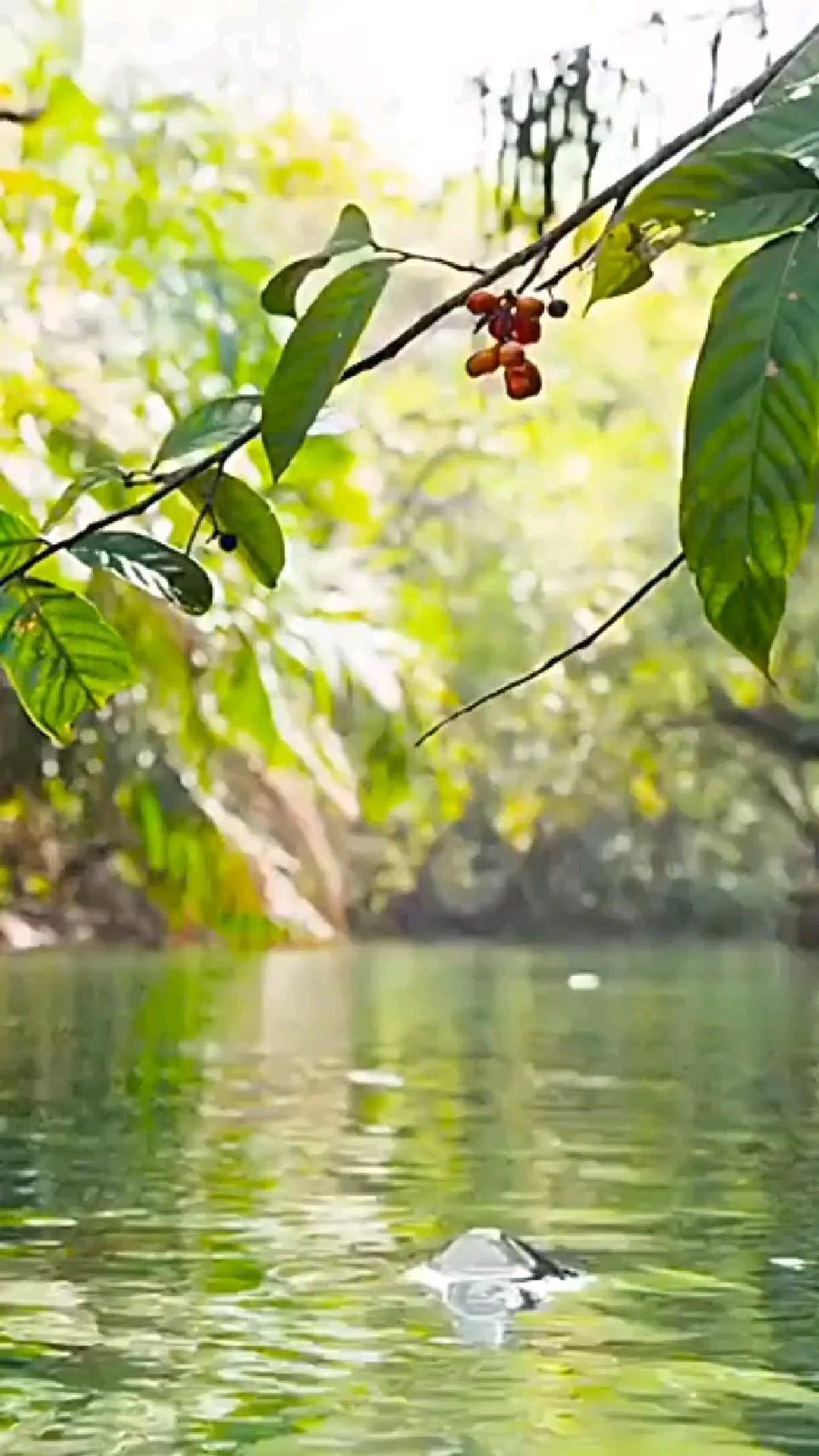 Fish eating fruits