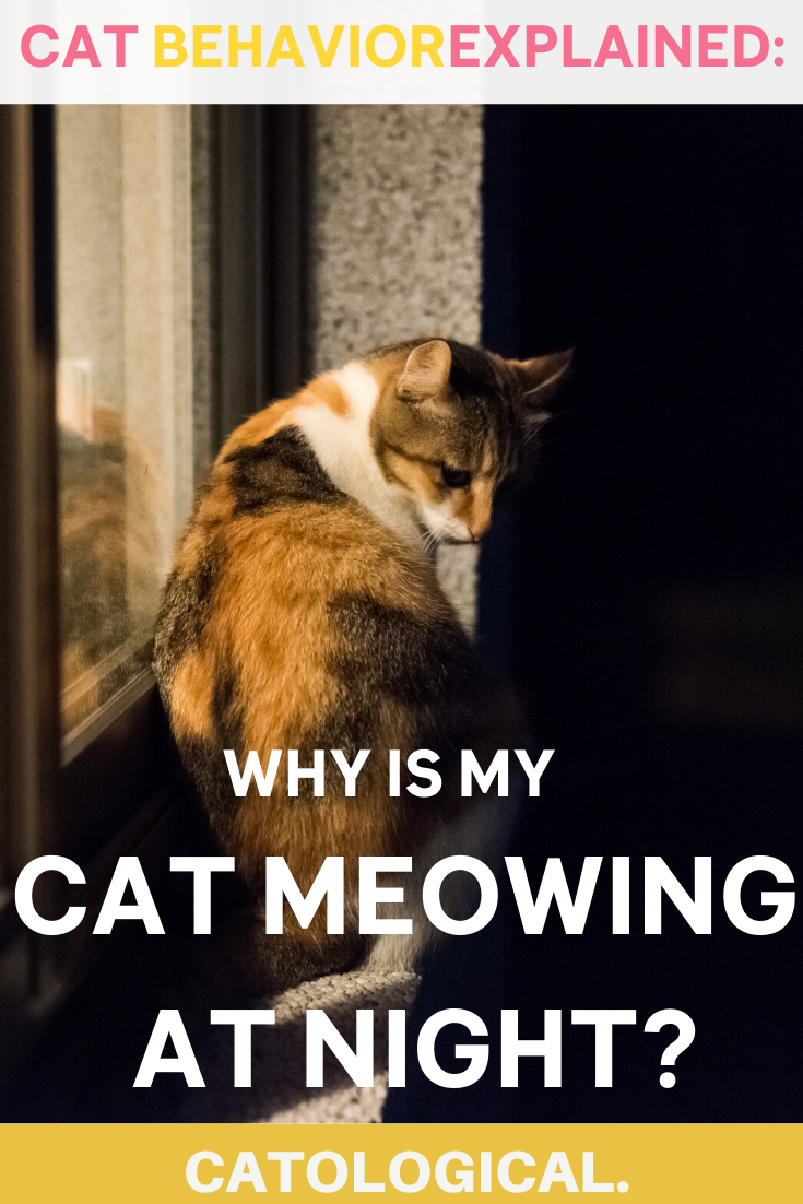 Why Does My Cat Meow Cry Or Yowl So Much At Night In 2020 Cat Meowing At Night Cats Cat Parenting