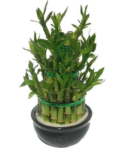 lucky bamboo bouquet porte bonheur la maison bien. Black Bedroom Furniture Sets. Home Design Ideas