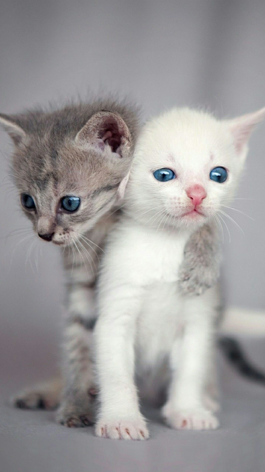 Pin By Lisa Green On Cats Kittens Cutest Cute Cats Photos Cute