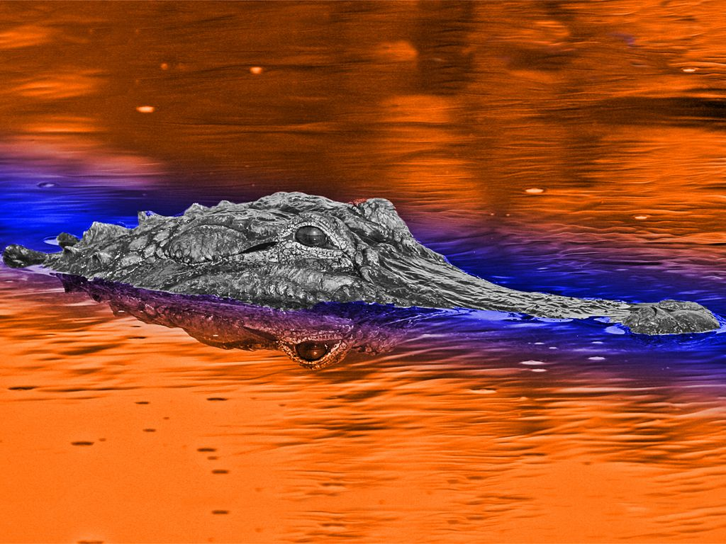 Pin By David Wakeman On Sports Fans Florida Gators Wallpaper Gator Nation Gator