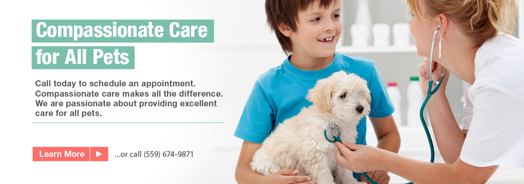 Madera Animal Hospital 16772 Road 26 Madera Ca 93638 559 674 9871 Pet Clinic Animal Hospital Veterinarian