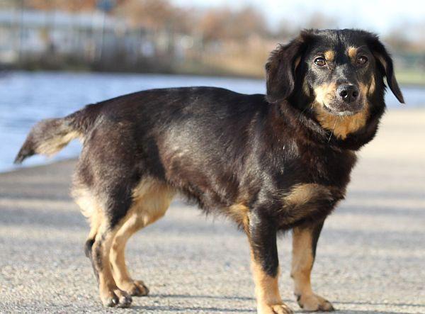 Tapsi Sucht Ein Zuhause Vielleicht Bei Dir Einfach Im Tierheim