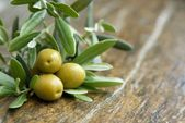 Photo of Olive leaves: beneficial properties for facial care (M …- …