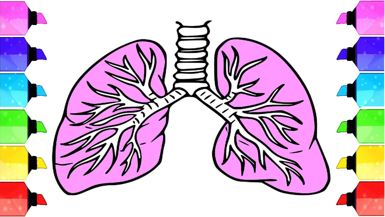 How to draw a lungs pair of lungs easy draw tutorial human organs drawing drawing drawings drawingtutorial drawing pencile drawing2me