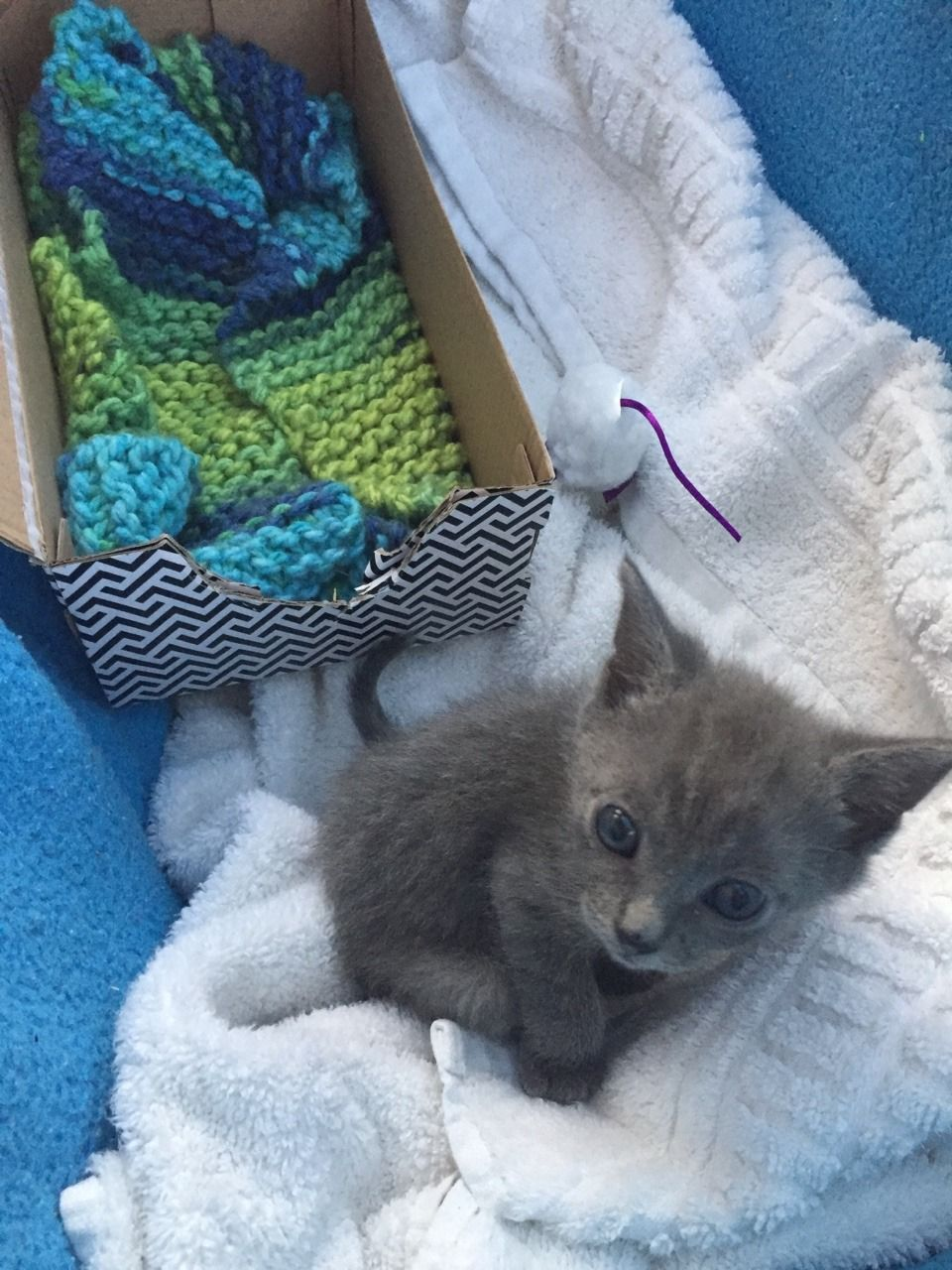 This Guy Is Poco We Got Him Today And He S So Sweet Cute Cats Photos Kittens Cutest Cats