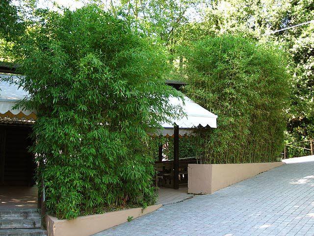 bambus als sichtschutz für die gastronomie kaufen | bambusbörse, Best garten ideen