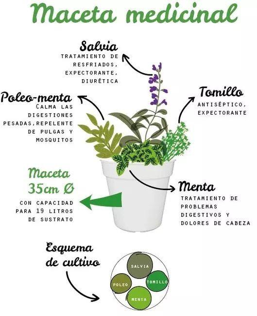 Plantas Medicinales Cultivo De Plantas Jardineria Y Plantas Plantas Medicinales