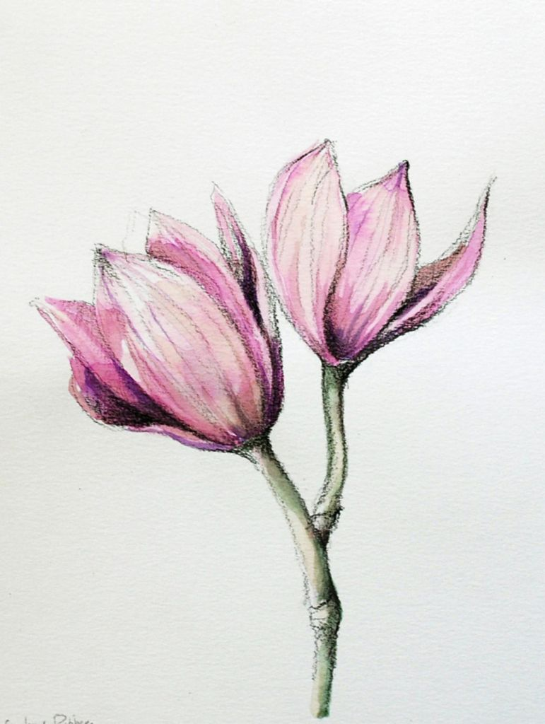 Flower Drawing With Color Easy Flower Colour Pencil Drawing At
