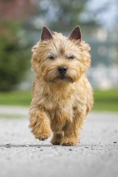 35 Small Dog Breeds That Make For Perfect Companions Puppies