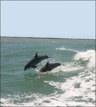 See Dolphinanatees Turtle Mound River Tours New Smyrna Beach Fl