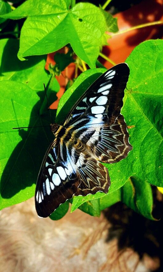 This butterfly is just beautiful