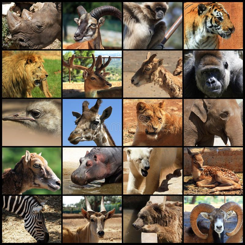 Animals Collage Collage With Different Animal Faces Spon Collage Animals Collage Faces Animal Ad Animals Animal Faces Cute Animals