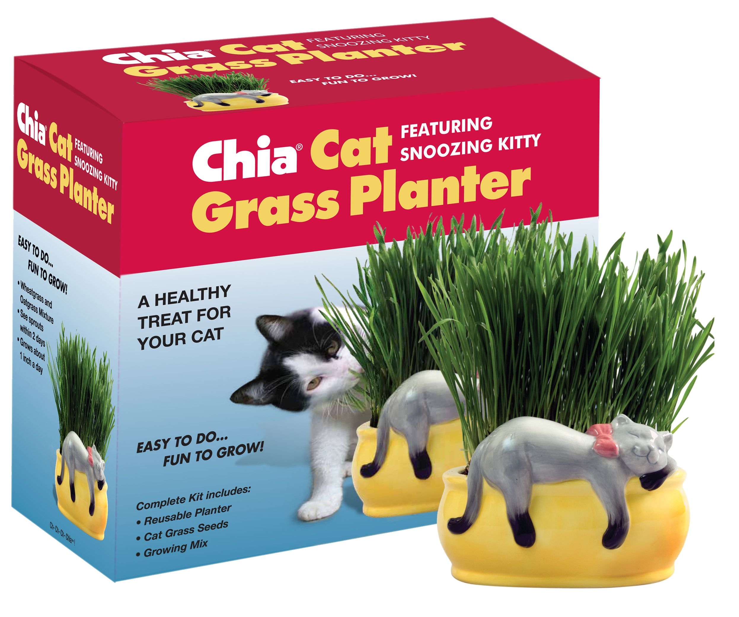 Chia Cat Grass Planter With Snoozing Kitty Cat Grass Cat Grass