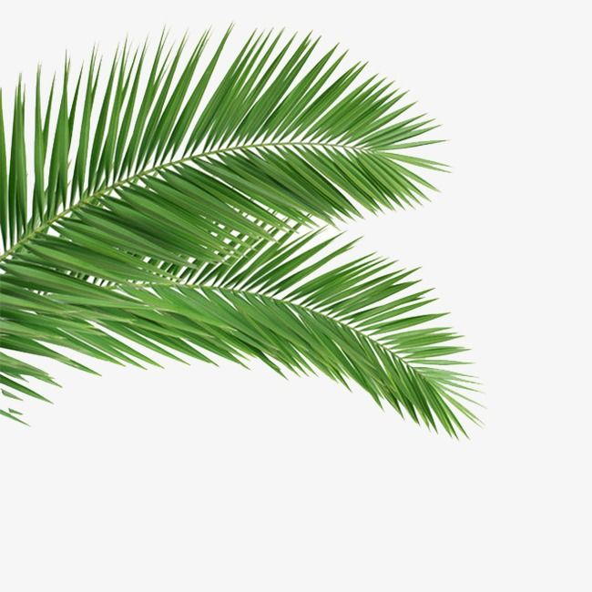 Palm Palm Leaf Leaves Png Transparent Clipart Image And Psd File For Free Download Antique Lamp Shades Small Lamp Shades Pendant Lamp Shade