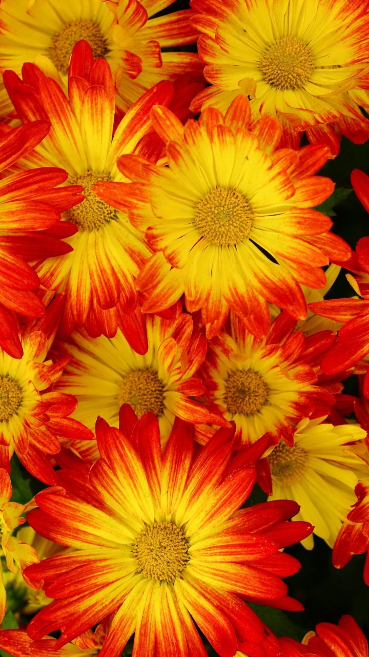 Beautiful Yellow Flowers Decoration 720x1280 Wallpaper Flowers