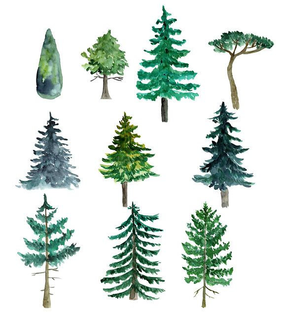 Pine tree mountain. Watercolor trees clipart