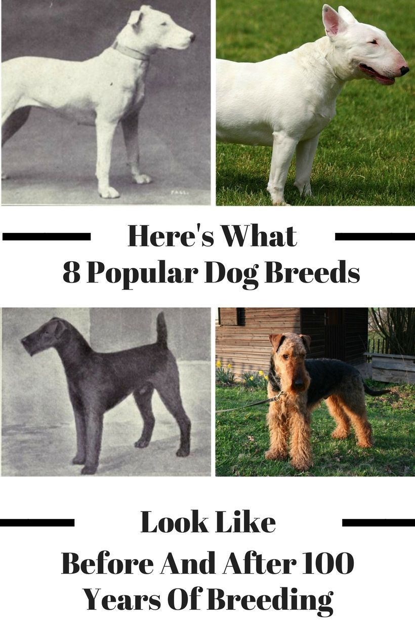 Here S What 8 Popular Dog Breeds Look Like Before And After 100
